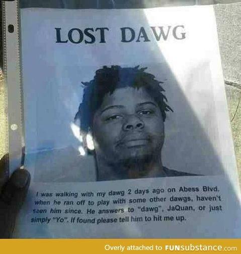 *REWARD* lost dawg