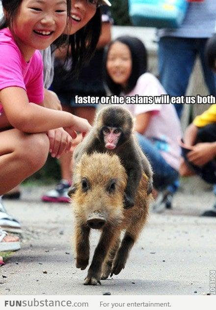Faster pork, faster!