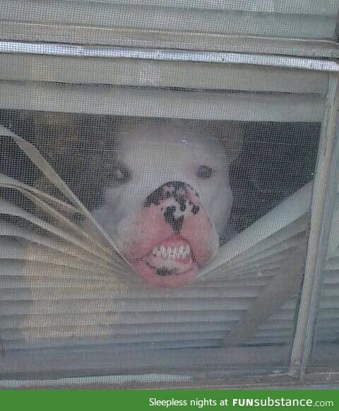 What I look like when the pizza guy arrives