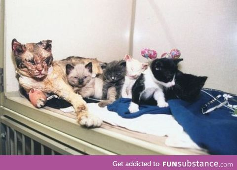 mother cat walks through flames five times to rescue her kittens