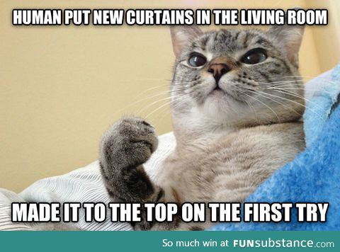 Success Cat doesn't mind if you redecorate