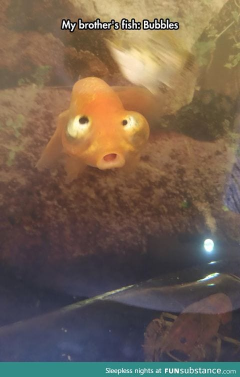 This fish is confused