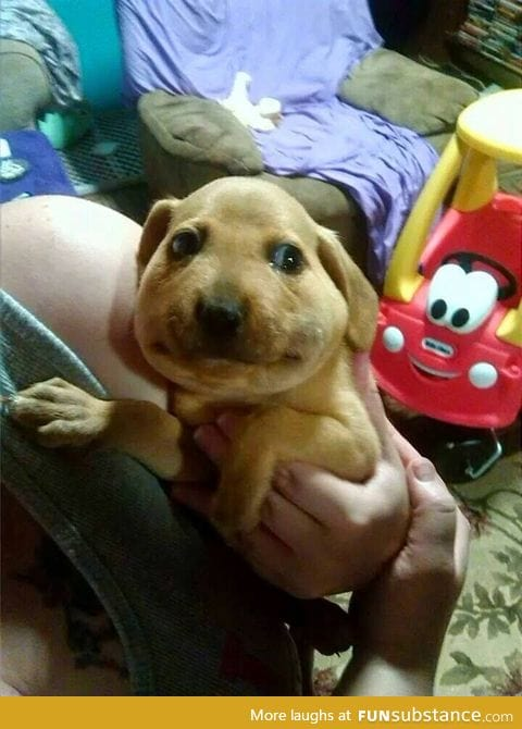 Poor puppy ate a bee