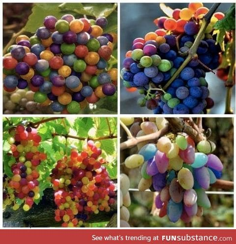 Rainbow grapes can occur as grapes ripen and turn from green to purple
