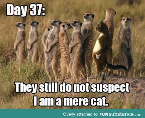 THEY SUSPECT NOTHING!!