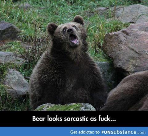 Sarcastic captive bear