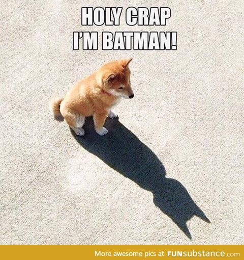Corgi just realised he's Batman