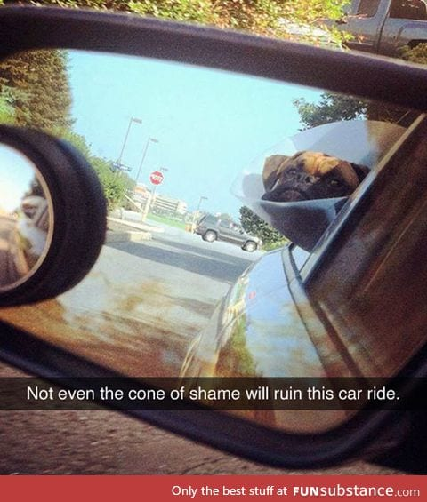 Don't let anything stop you little dog