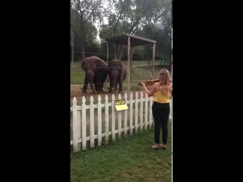 Watch These Elephants Dance To A Girl's Violin