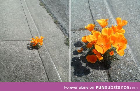 Flower blooming in Concrete