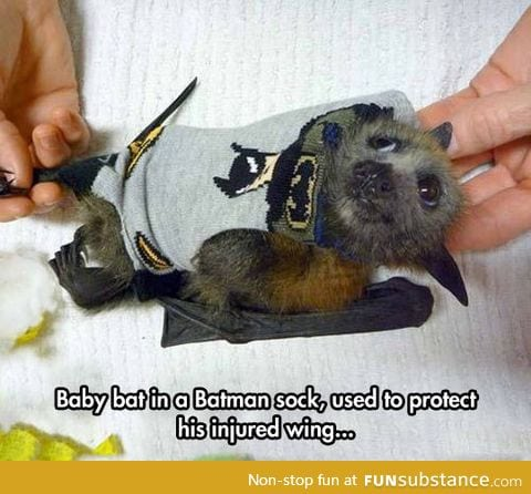 Baby batman bat