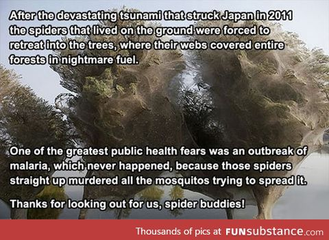 Spiders saved us from malaria
