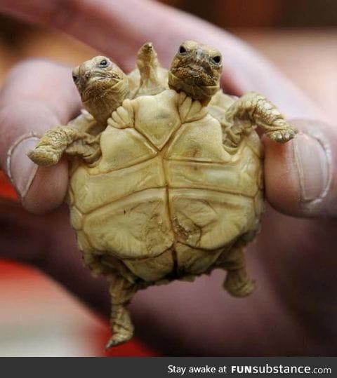 Infant mutant baby turtle