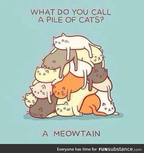Funny cat joke:D