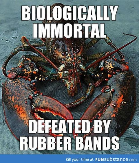 That poor lobster
