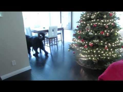 Dog Plays Hide And Seek With A Little Girl