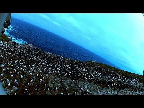 A bird stole a camera and took this cool footage