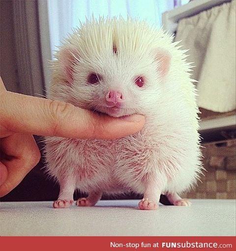 Albino Hedgehog (RARE)
