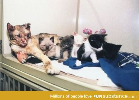 Mother cat walks through flames 5 times to save kittens
