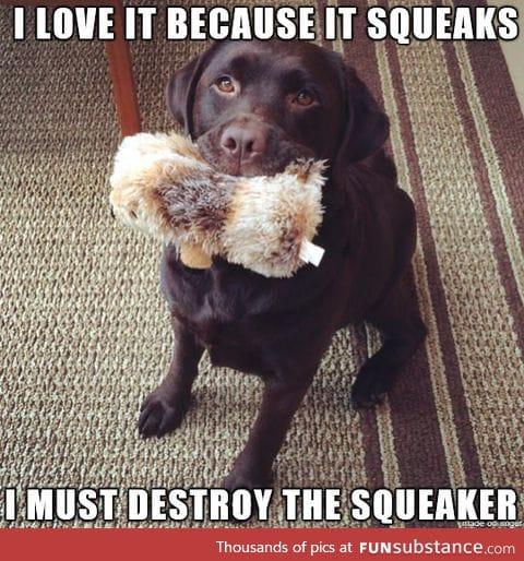 The logic of a dog