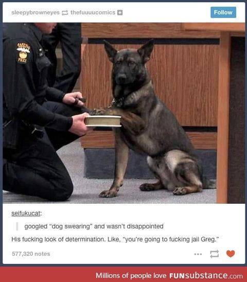 Police dog ready to take on crime