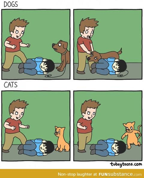 Not really a cat person