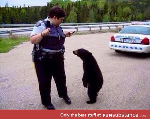 I bet you wouldn't have pulled me over if I was a polar bear