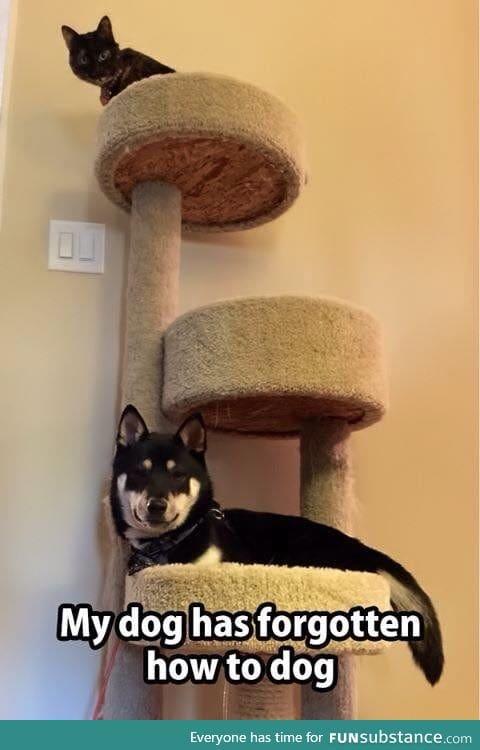 Dog has turned cat