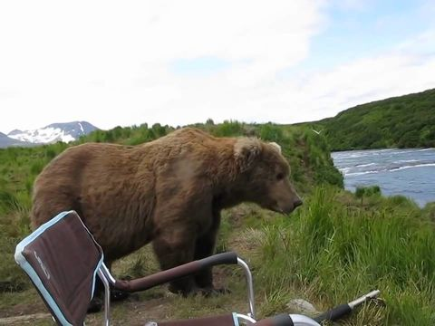 Brown bear decides to chill with Alaskan guy
