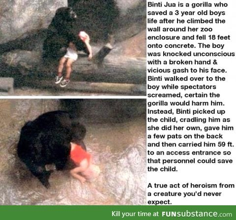 Faith in the animal kingdom restored