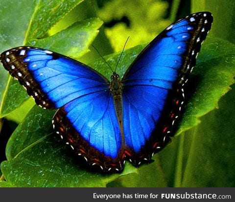 Wow, check out this white and gold butterfly
