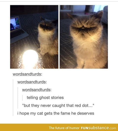 I want the cat