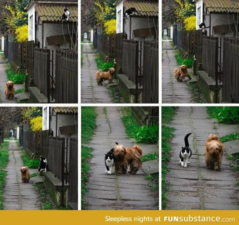 Every day at the same time, she waits for him. He comes and they go for a walk
