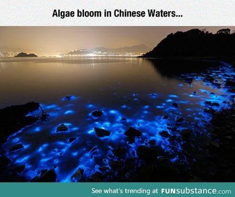 The beauty of bioluminescence