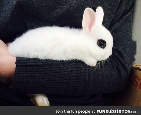 Bunny with big eyes