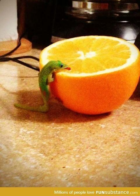 Little dude loves his orange