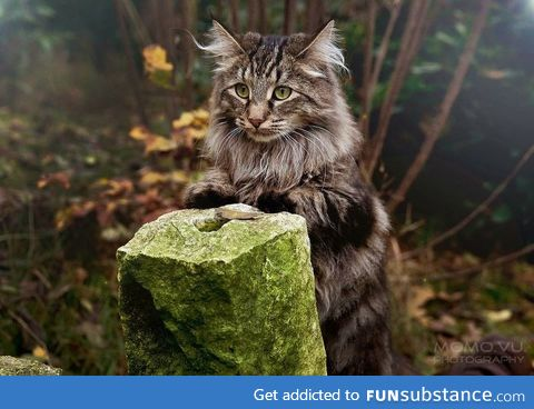 This is the type of cat that would try to sell me magical potions in the wood
