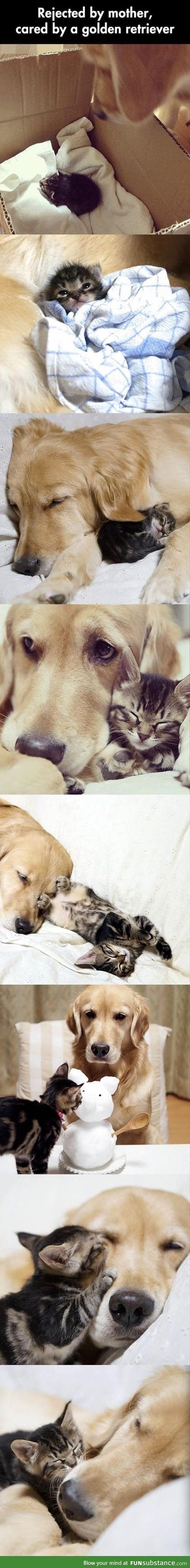 Dog looks after kitten