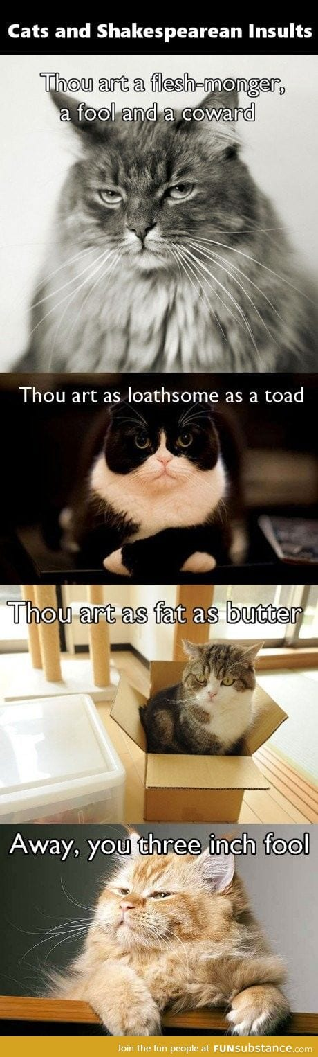 Cats Expressions are Perfect for Insults