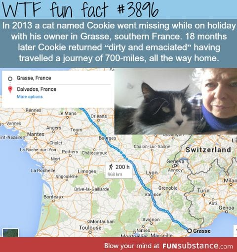 this cat traveled across france to find it's owner