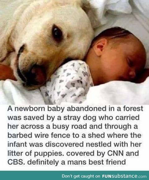 Dog saved abandoned baby