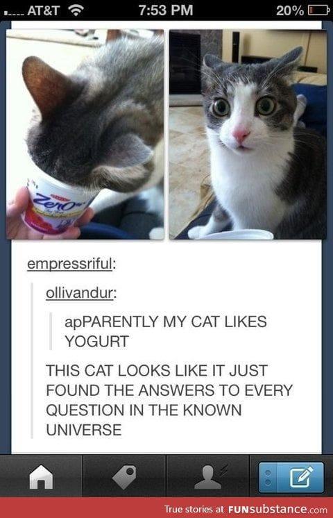 So, my cat likes yogurt.