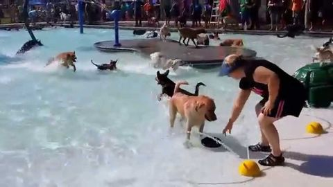 Before the city pool closed for the year they open it to dogs
