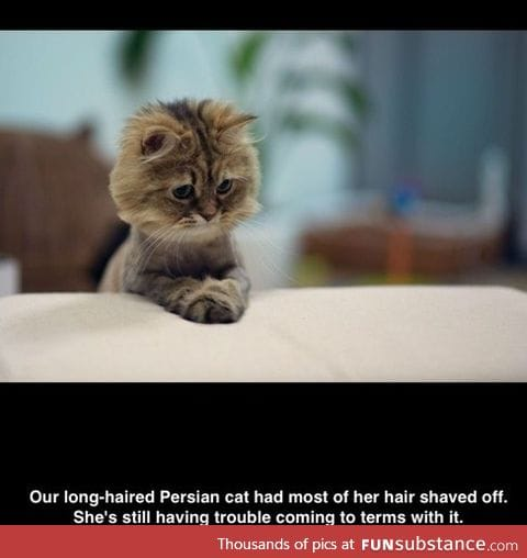 Cat can't accept its new hairstyle