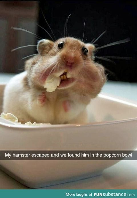 """My little hamster escaped and I found him in the popcorn bowl!"""