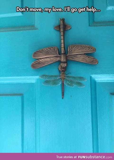 Confused dragonfly