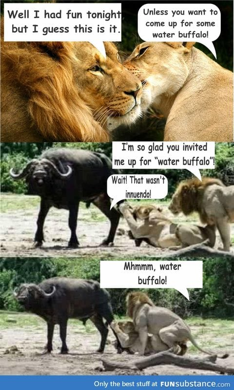 Inviting the lion for water buffalo