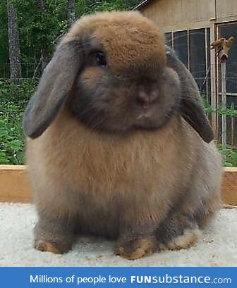 I am the bunny on this site chubbybunny