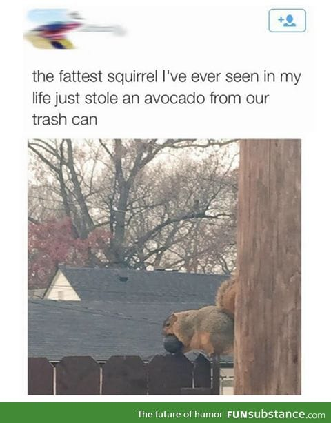 Look at this fat squirrel