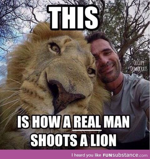 How to properly shoot a lion